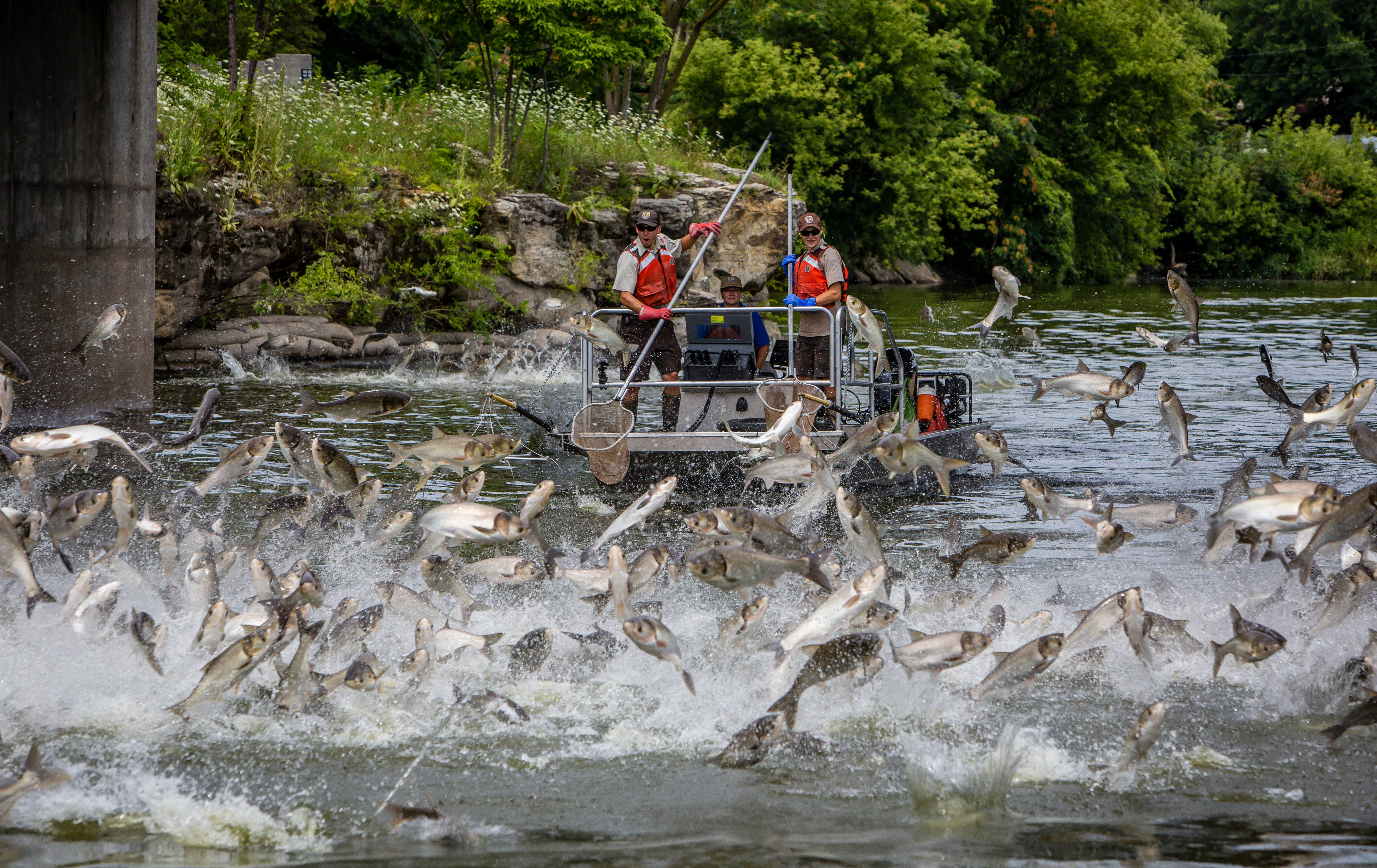 Fox News: Costly effort to fight invasive Asian Carp includes 'Carp Cowboys' and high-tech dam project