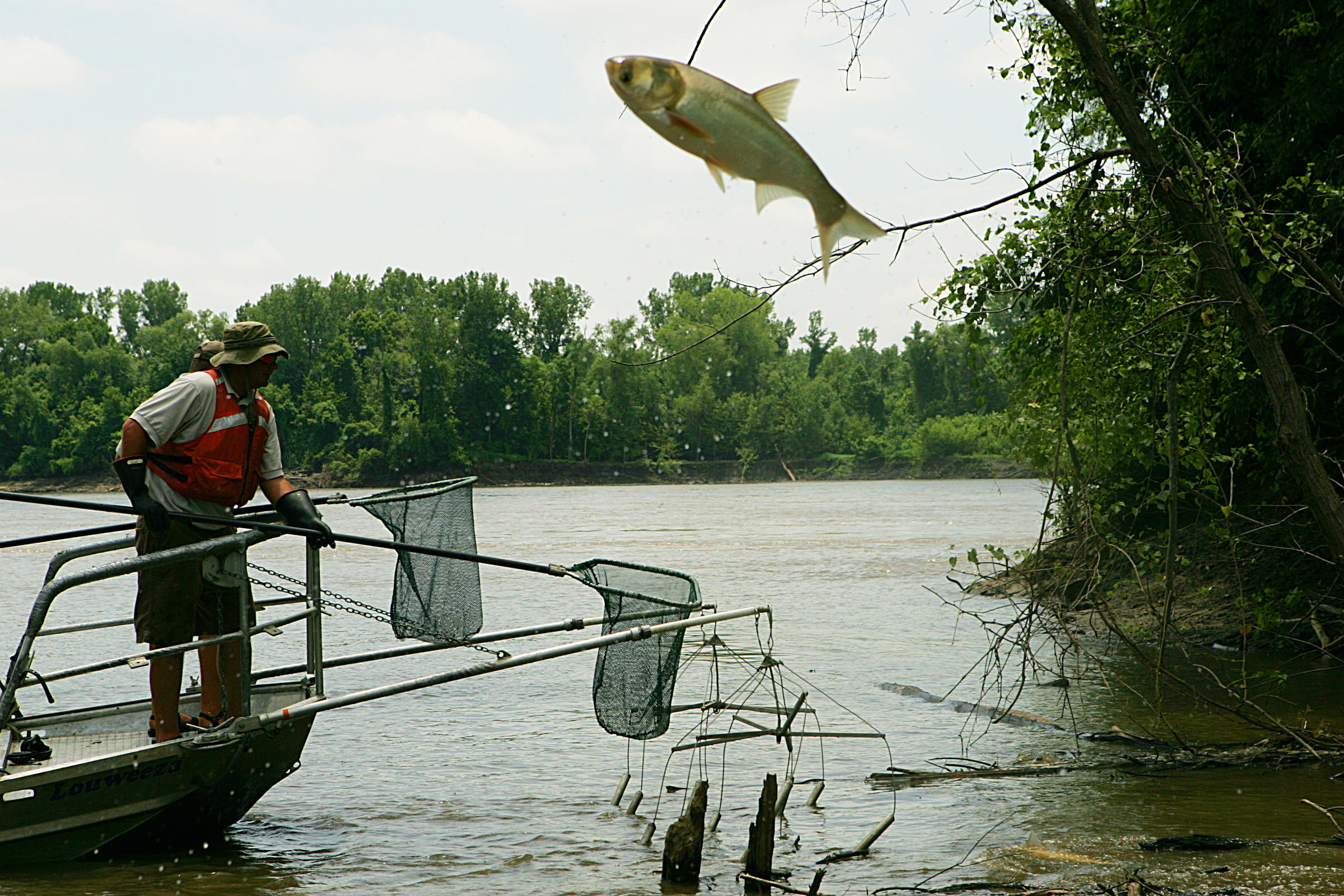 Michigan Radio: More than 200 outdoor groups support Army Corps plan to block Asian carp