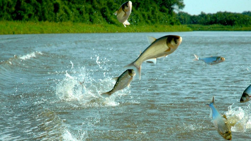 Invasive carp, COVID-19: Michigan lawmakers forced to make tough decisions